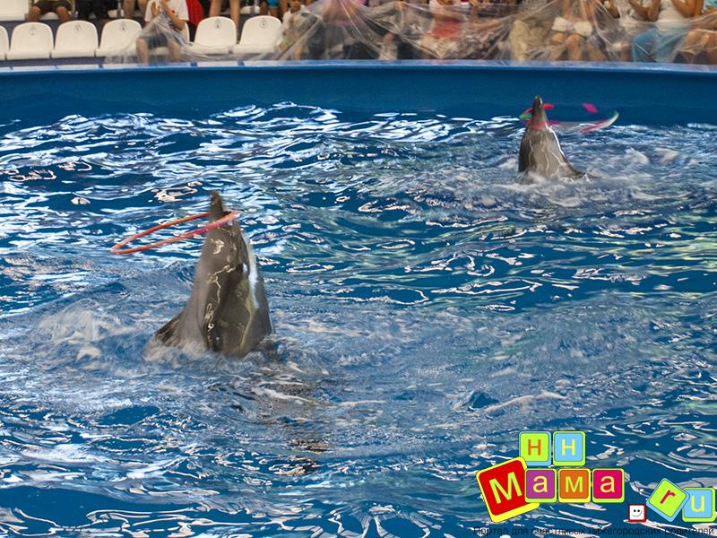 Нижегородский дельфинарий
